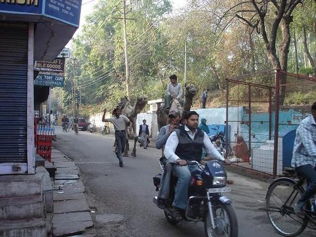 Camellos por la calle al lado del Taj Majal. [Foto Ariel Lichtig]
